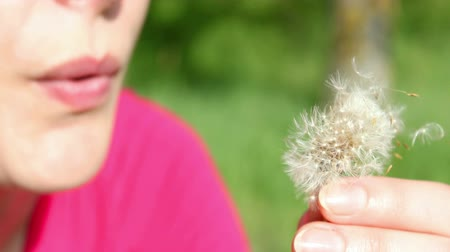 içerik : Young woman blowing Dandelion seeds In the field in close-up,video clip ;Dandelion seeds