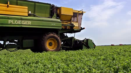 горох : harvest peas ; specialized combine for harvesting peas in the work on the farm,video clip
