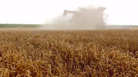 kombájn : Combine in a cloud of dust ; wheat harvest with modern combine harvester,video clip Stock mozgókép