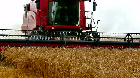tractor trailer : Combine harvester ; wheat harvest with modern combine harvester,video clip