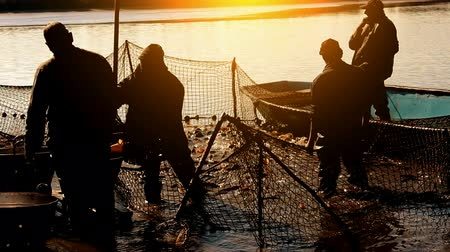 ryba : Fishermen at sunset ; Fishermen classify caught fish on the pond,video clip Dostupné videozáznamy