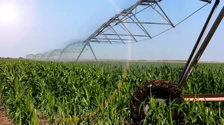 milho : Automated irrigation system ; Irrigation system in operation in the fields under corn,video clip