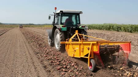 papa : Potato digger in operation in the field ; Harvest potatoes from a tractor and a modern potato digger,video clip Vídeos