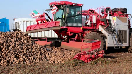 rotační : Modern machinery for sugar beet ; Loading cleaned sugar beet  directly in the truck using modern agricultural machinery,video clip