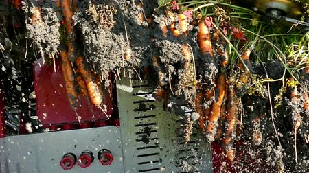 part of clip : Modern machinery for the harvest of carrots ; Mass production and harvest of carrot roots with modern agricultural machinery,video clip