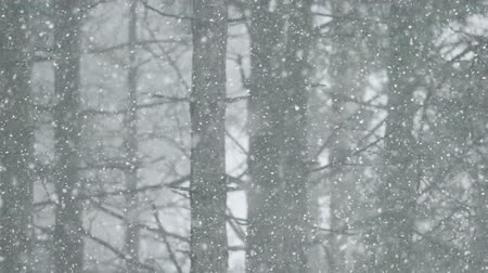 bos winter : Sneeuwblizzard in het bos; Sneeuwblizzard in de berg bos, slow motion video clip