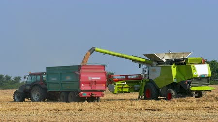 kombájn : Combine harvester and tractor with trailer on harvest wheat ; Scattering harvested wheat from combine harvester in a tractor trailer,video clip
