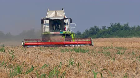 трейлер : Combine harvester in a field of wheat ; Harvesting of wheat with a modern combine harvester Стоковые видеозаписи
