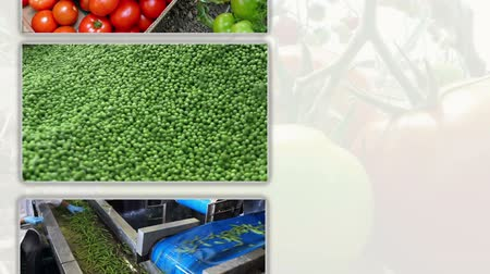 ervilhas : Vegetables in Multi Screen  Growing and production of different types of vegetables Vídeos