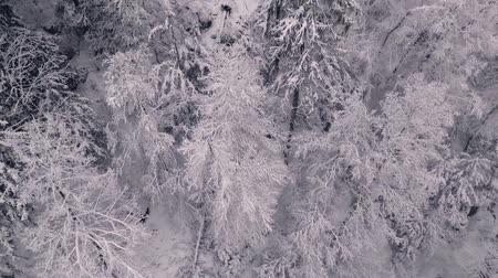 drone flight over a silent winterwonderland Vídeos
