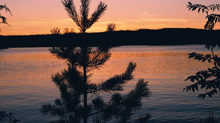 a sunset over a lake with a silhouette of a fir