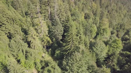 Литва : Drone flight over a forest in a hilly area