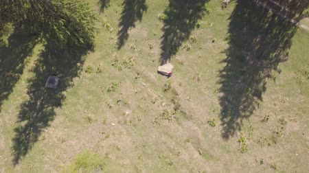 suíço : Drone flight over a forest in a hilly area