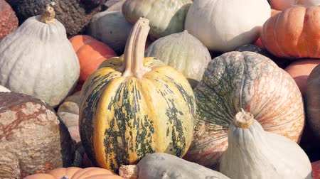 položit : a lot of different pumpkins