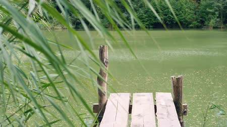 gangplank : A calm lake framed with reeds Stock Footage