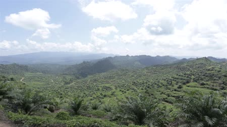 palm oil plantation : Newly Ground Palm Oil Plantation In Valley