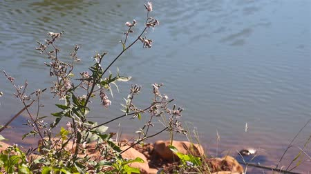 Plant On The Lakeside With Water In The Back -  Close Up