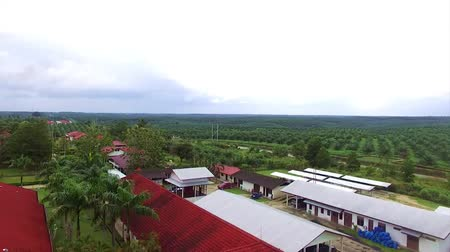 kl : View of Palm Oil Plantation - Aerial - Moving Upwards