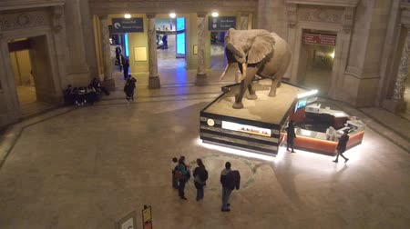 subway car : People Watching Elephant Exposed In Museum - Static