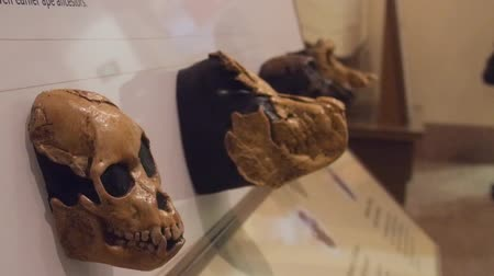 subway car : Skulls Exposed In Museum - Slide - Left To Right