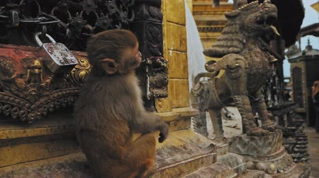 monkey temple : Baby monkey sit by locked lattice near statue in Swayambhunath temple, Kathmandu