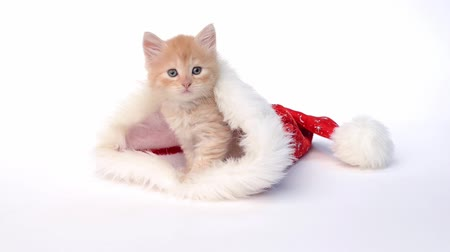 рождество : Little red kitten in a Christmas hat