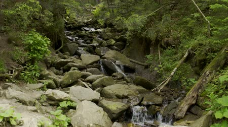 rivulet : Small mountain river in forest