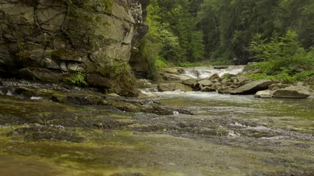 kükreme : Sliding video of a rapid mountain river with cascades in forest canyon Stok Video