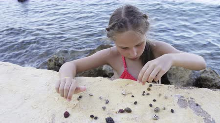 antennae : Little girl playing with Paguroidea on a beach