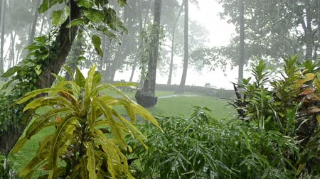 chuva : heavy rain in tropical forest. rainy season. fern on a trunk with drops falling on it. Bali Indonesia. With audio