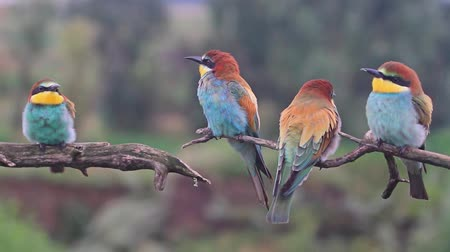 brazil : Exotic colored birds sing songs on the branches