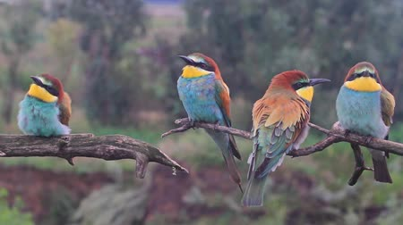 Колумбия : fun exotic colored birds sitting on a branch