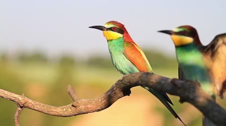 nó : pair of colored bird flies and sits on a branch