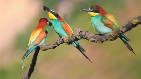 atthis : colored birds catch bumblebee, sit on a branch and fly away