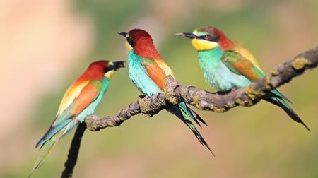 samet : Three exotic birds are sitting on a swinging branch