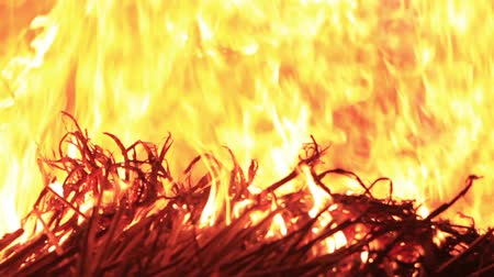 inflammable : Bright burning of dry grass Stock Footage