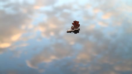 flutuante : ship of leaves floating in the autumn lake