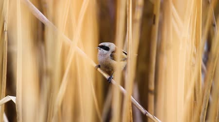 csajok : little bird sings sitting in the thickets