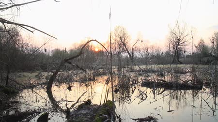 quiet evening : sunset in the spring swamp