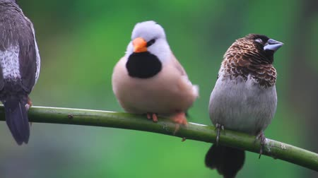 common : beautiful cute birds groom each other