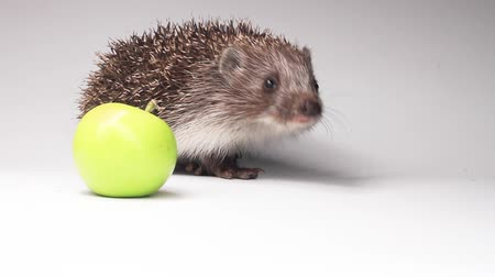 гласность : hedgehog with green apple on white background Стоковые видеозаписи