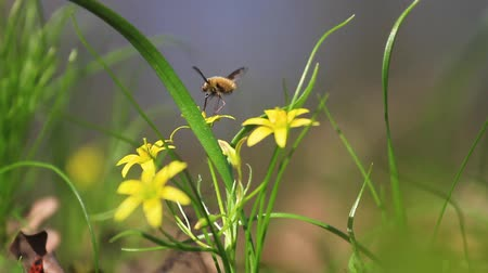 cricket : insect spring pollinates forest yellow flowers