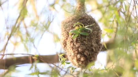 mittens : bird flies out of an unusual nest Stock Footage