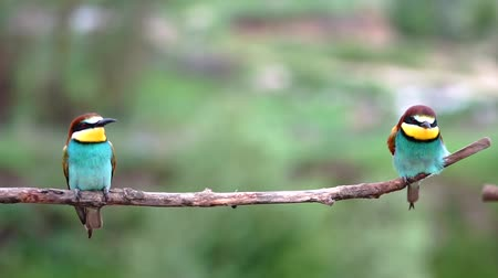 beautiful birds sit slowly swaying on a branch