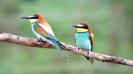 beautiful birds sitting on a branch and looking around