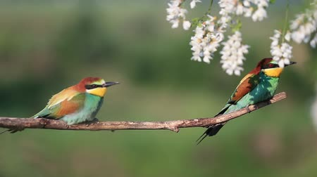 couple of colorful birds resting on the branch after the flight