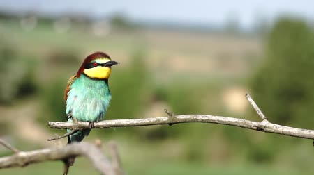 ara : beautiful cute bird sitting in the morning on a branch