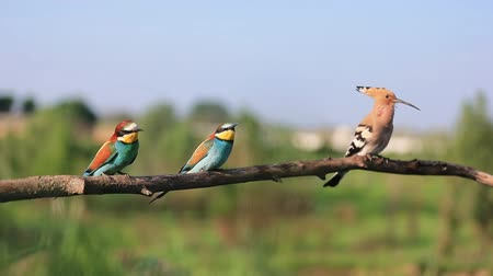 unusual wild birds sit on a branch and sing