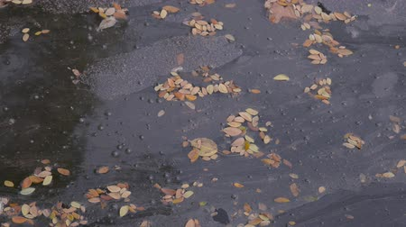 Dry fallen tree leaves in the river surface Lap dry fallen tree leaves that floats on the surface of the river. Stok Video