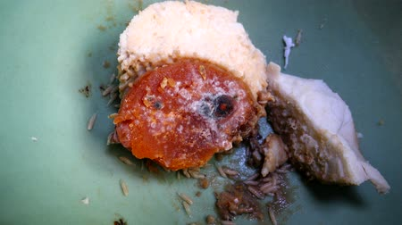 Worm fly on spoiled food, Blow Fly Larvae, Maggots Of Fly.